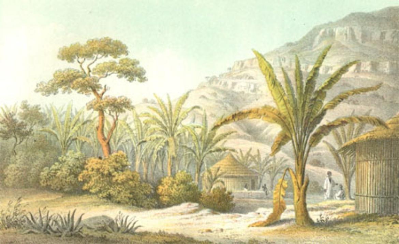 """""""Enzet (Musa) - Pflanzung im Woina-Thal in Simen"""". Kolorierte Lithographie nach einem Bild von Theodor Heuglin 1857 (c)"""